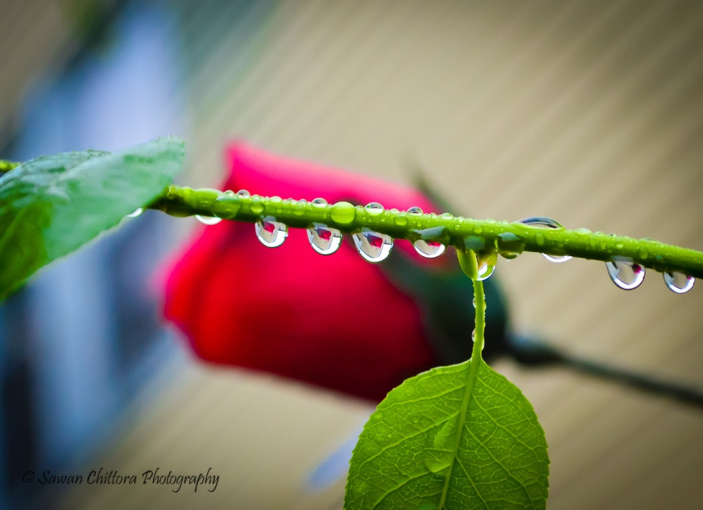~ Reflection of Love ~ #GreetingCard #Monsoon #Droplets